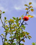 Hoch hängende Früchte